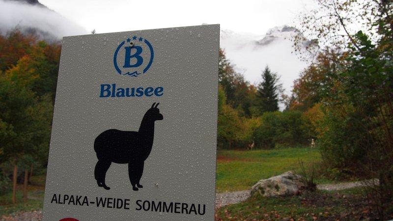 Lago Blausee Suíça - Criação de Alpacas