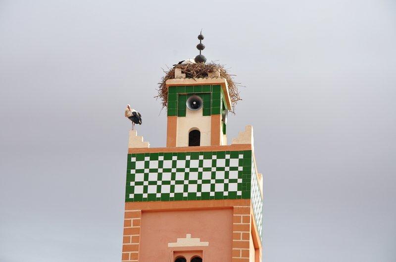 Viagem Ait-Ben-Haddou Ouarzazate Marrocos - Pássaro em mesquita